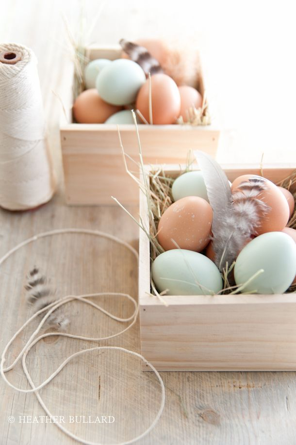 feather and eggs