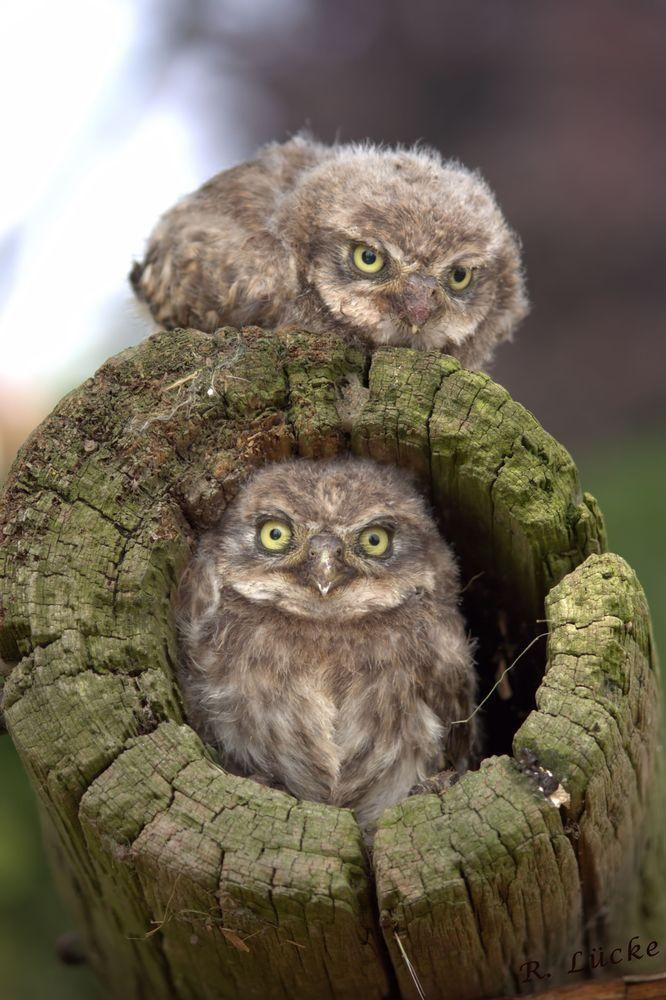 Owl Babies | Amazing Travel Pictures - Amazing Pictures, Images, Photography from Travels All Aronud the World