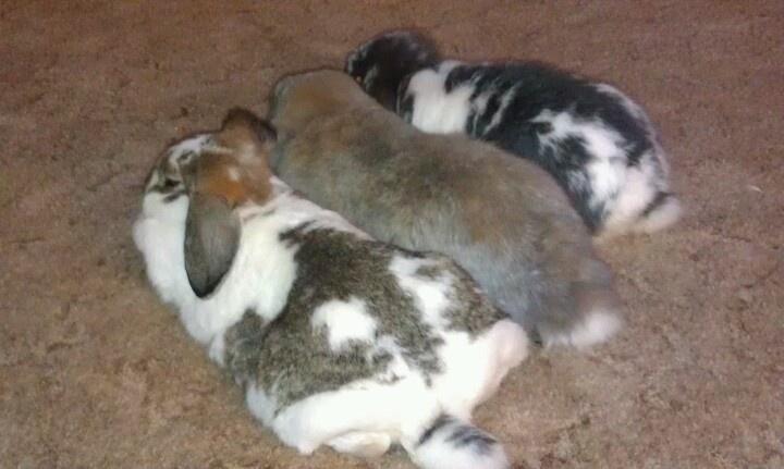 Butts Bunnies Com 13
