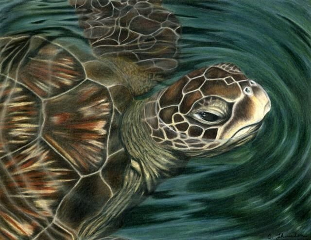 328 best Turtles Frogs images on Pinterest Sea turtles Sea