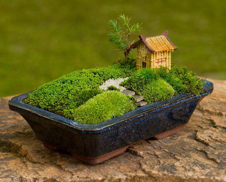 Moss garden in a bonsai pot