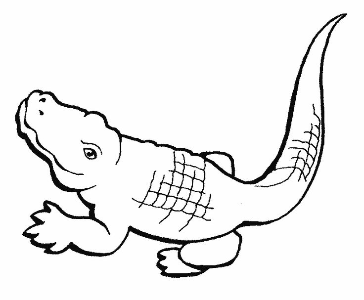 alligator coloring pages 1884 alligator crocodile coloring pages