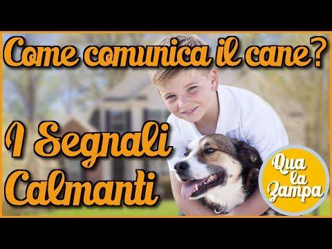 Come comunica il nostro cane: i Segnali Calmanti | Qua la Zampa - YouTube