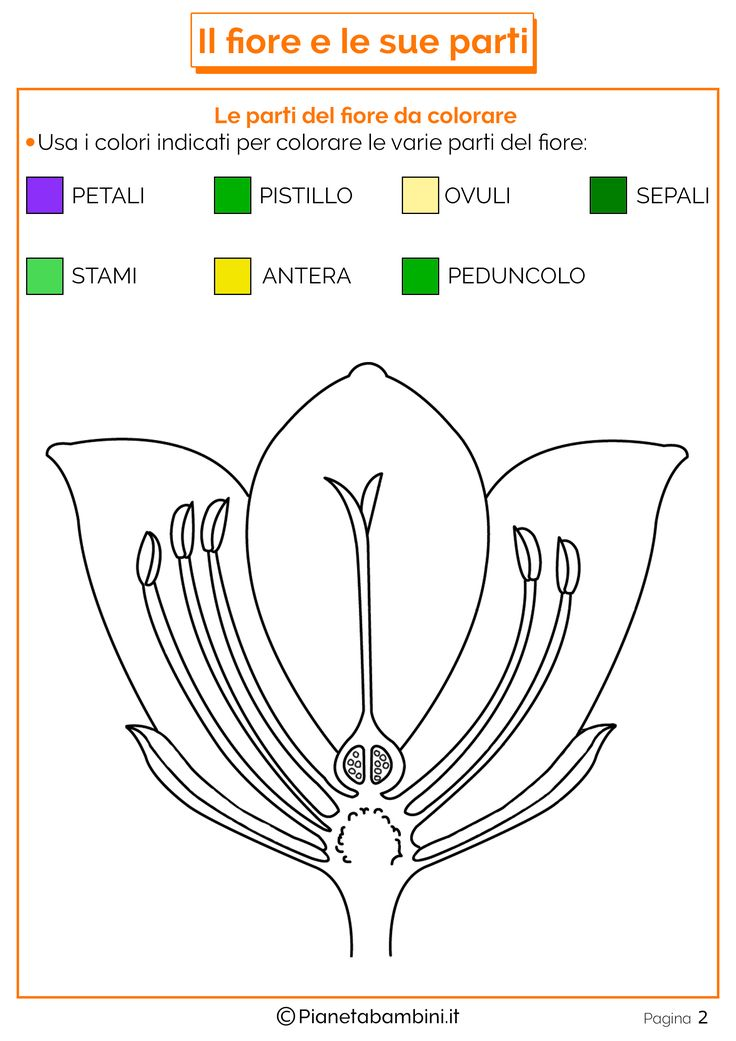 Parti-Fiore-da-Colorare.png (2480×3508)