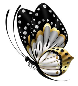Butterfly 1.png                                                                                                                                                                                 More