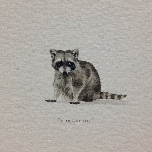 Oh no, now I want a raccoon tattoo. They my fave