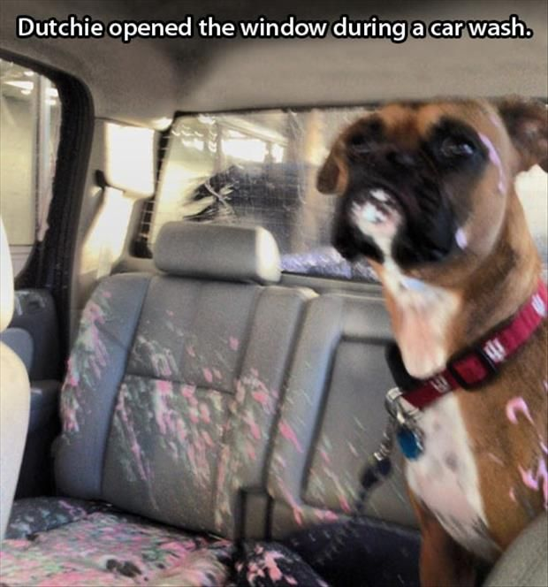 154 best carwash signs ideas images on pinterest car wash car he opened the window during the car wash dog shaming shame boxer needs child lock activated also why werent other people in the car with him solutioingenieria Image collections