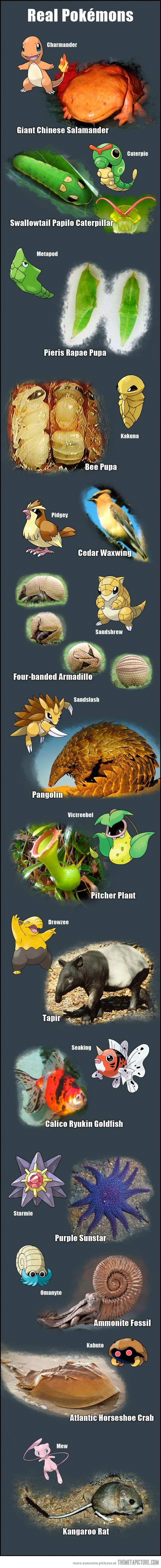 That's how they created Pokemon, using real life animals as inspiration. Mind blown!