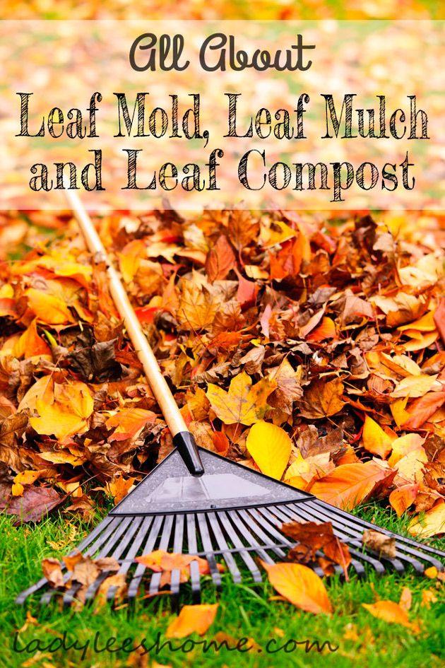 Here is everything you need to know about leaf mold, leaf mulch, and leaf compost. How to make it and how to use it. Take advantage of this free resource! #LadyLeesHome