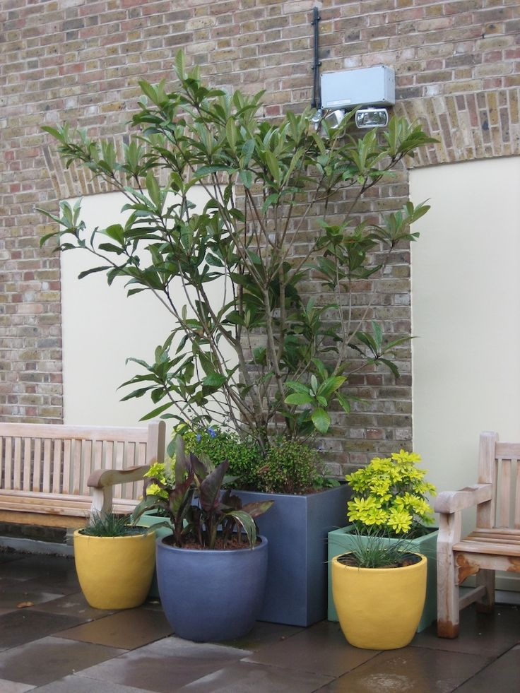 Combination Of Planters To Create A Focal Piece Within A Large Concrete  Garden