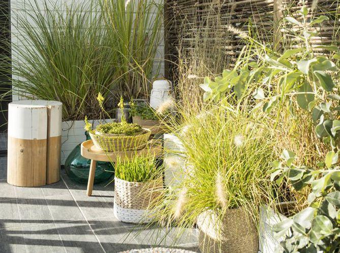 #plantes #balcon