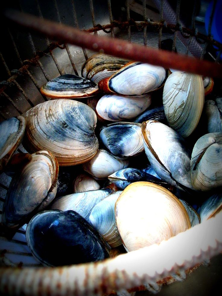 Filled clam basket