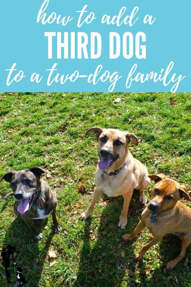 Adding A Third Dog Dog Training Three Dogs Dogs