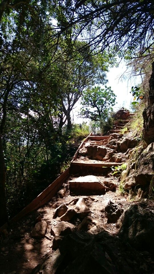 Steps up Newlands forest