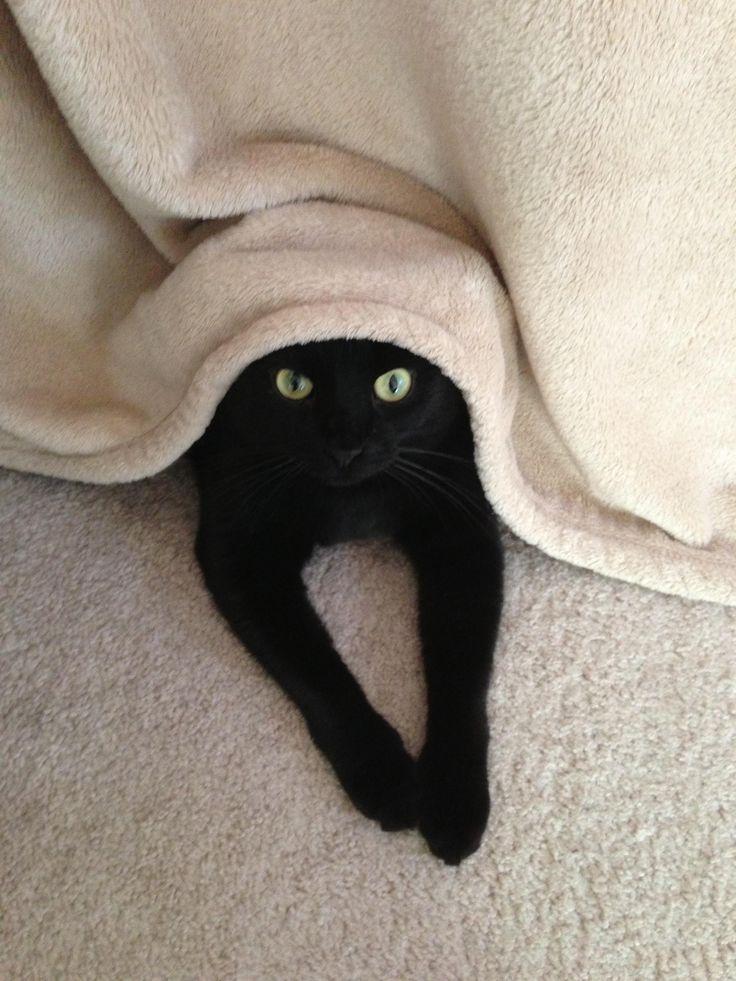 Chat noir trop mignon