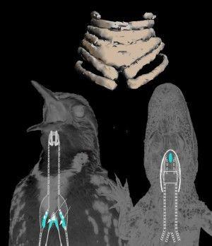 Var dette verdens første sangfugl? | forskning.no