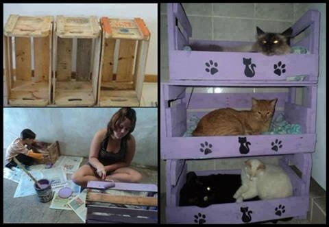 Spice of LIFE Triple bunk beds for your kitties, made from old crates.