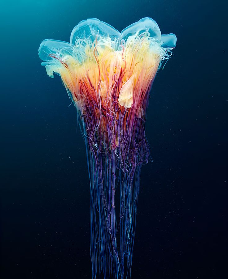 So pretty but deadly jellyfish
