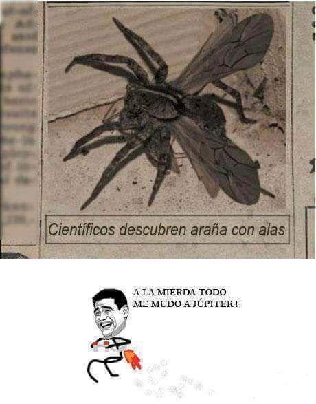 videoswatsapp.com imagenes chistosas videos graciosos memes risas gifs chistes divertidas humor http://ift.tt/2fAvTQA