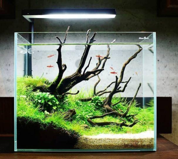 Beautiful Fish Tank Ideas For Relaxing Home In 2020 Fish Tank
