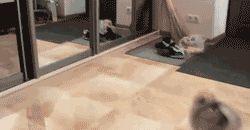 Esse cachorro que decidiu que tentaria correr atrás dos seus sonhos.   28 Cachorros que se arrependeram de suas decisões