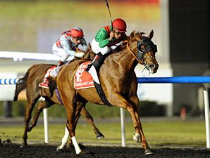 If ANIMAL KINGDOM wins the Queen Anne Stakes at Royal Ascot next week he will become the FIRST horse to claim victories in the Kentucky Derby, Dubai World Cup and Royal Ascot. As well as that unique feat, he will also have triumphed at Grade 1 level on dirt, synthetic, and turf surfaces on three different continents!