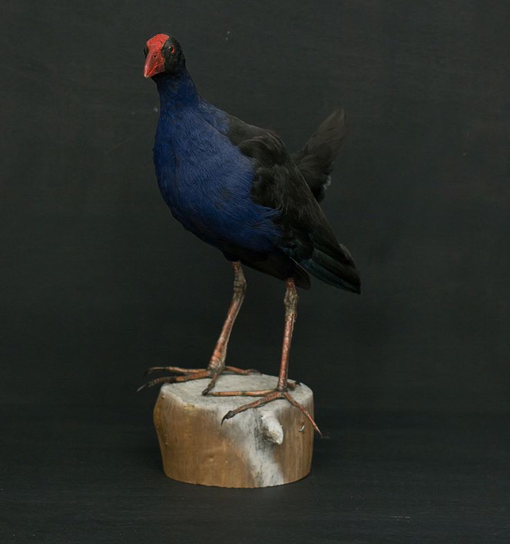 Pukeko - Vintage Industries