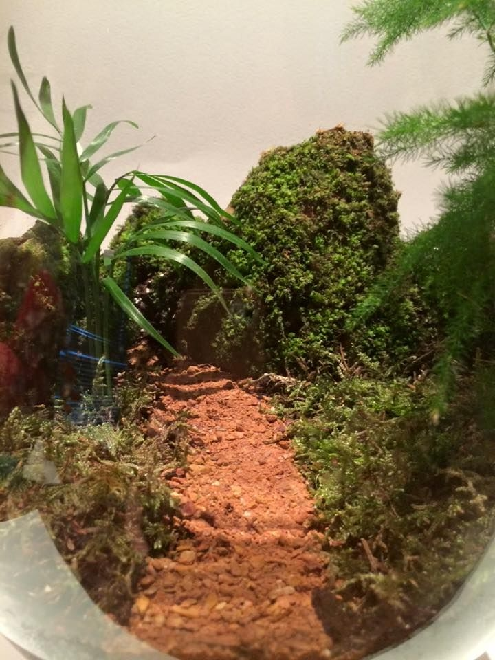 Japanese Terrarium - Close Up