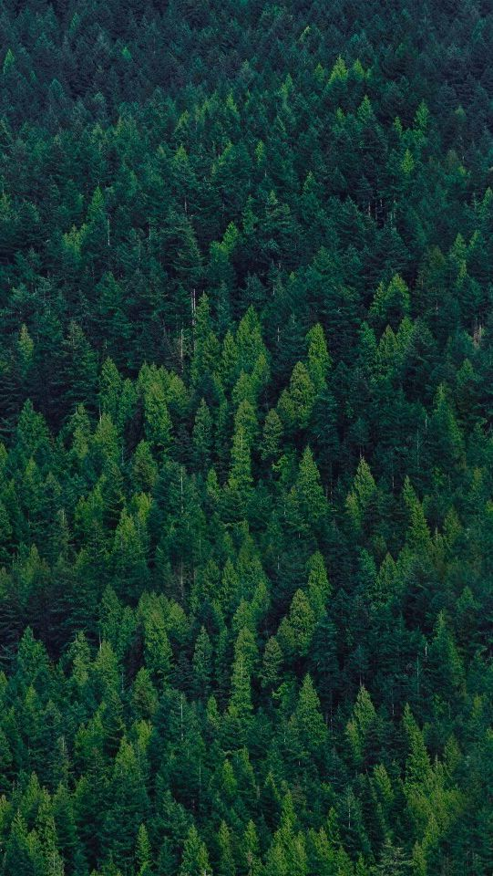Green-Forest-Trees-iPhone-Wallpaper