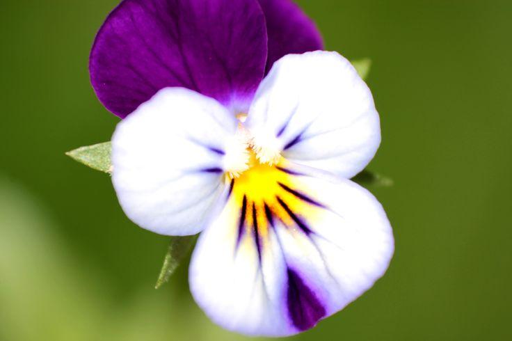 Violet! #violetta #fiori