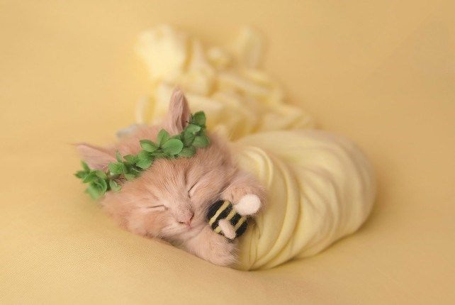 This Adorable Newborn Kitten Photoshoot Is Just Purr Fect Schattige Dieren Schattige Katten Schattig