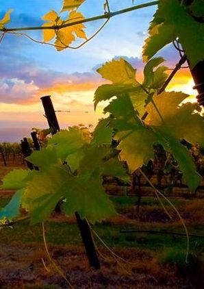 53 Best Napa Valley Scenery Images On Pinterest Vineyard