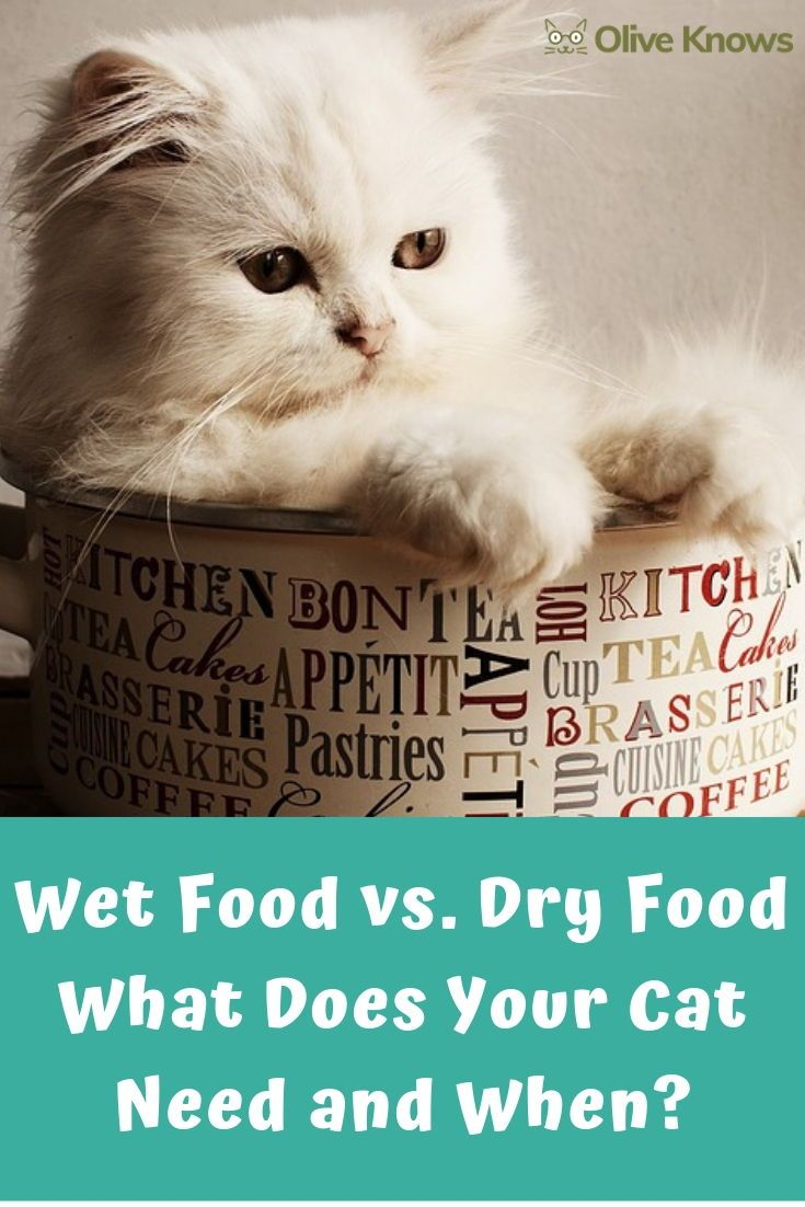 Wet Food Vs Dry Food Cat Nutrition Cat Care Cat Parenting