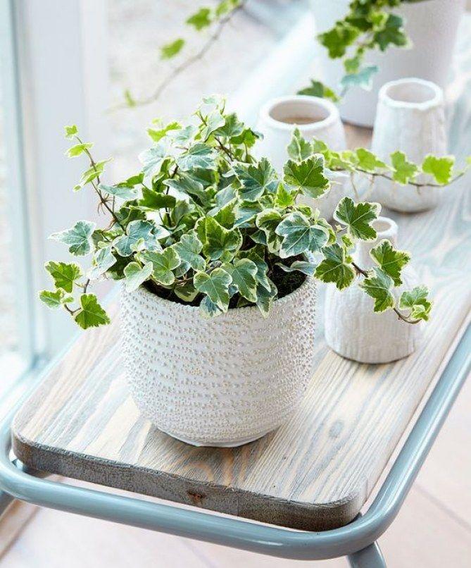 Quelle plante avoir dans la chambre gardening and decor plante chambre deco chambre et - Plante dans la chambre ...