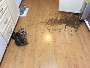 容疑者はニャンコ? Twitter的『許すしかない猫のイタズラ』 - NAVER まとめ