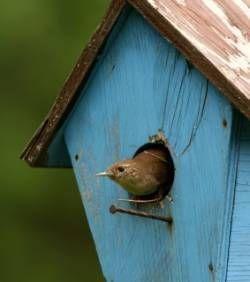 nid à soieaux, maison à oiseaux, bird house, nichoir