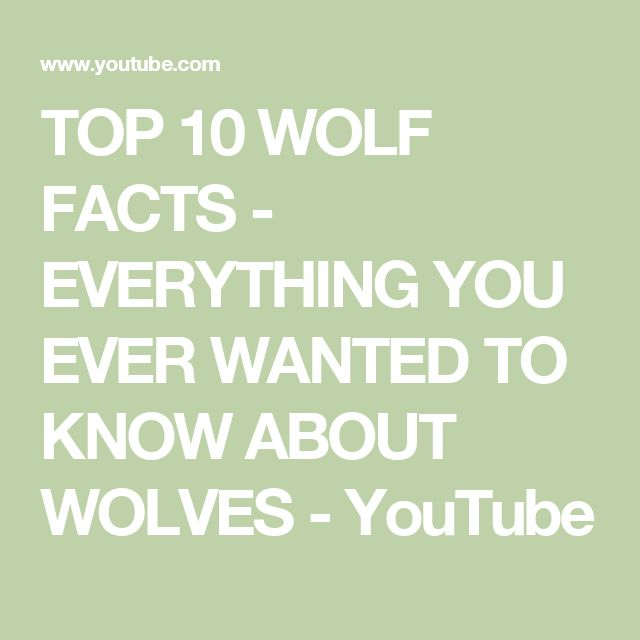 TOP 10 WOLF FACTS - EVERYTHING YOU EVER WANTED TO KNOW ABOUT WOLVES - YouTube