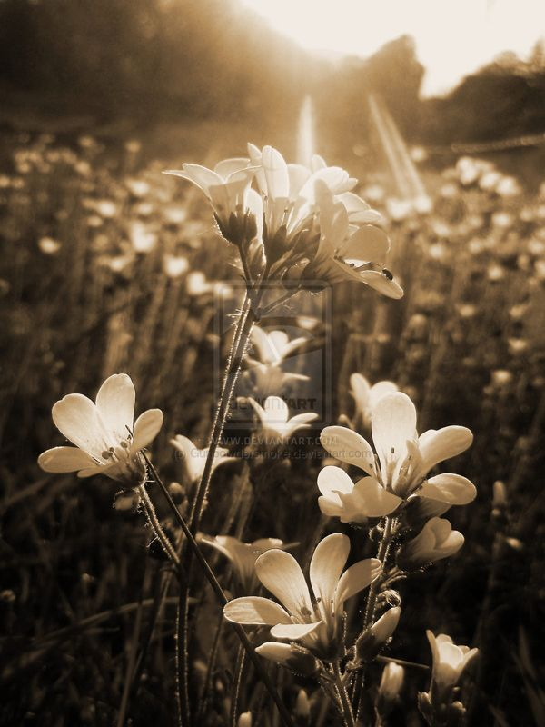30 Beautiful Examples of Sepia Photography | PSDFan