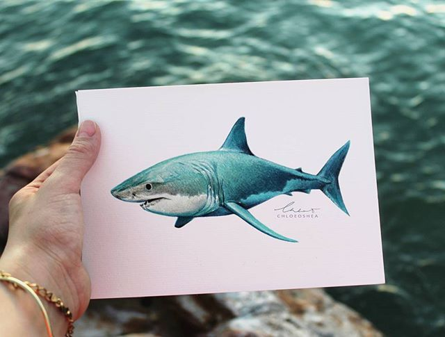 What I've been working on at the moment. My first ever shark drawing.