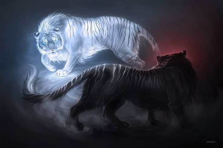 tigers of good and evil circling