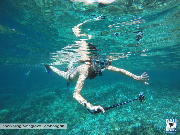 #Snorkeling in Mangrove #Lembongan with #BaliDiving www.balidiving.com
