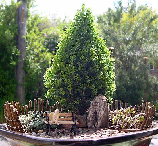 1000+ Images About Landscape Dwarf Trees On Pinterest