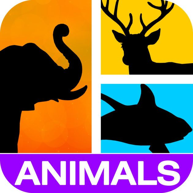 #NEW #iOS #APP Animal Quiz - Dong Yiming
