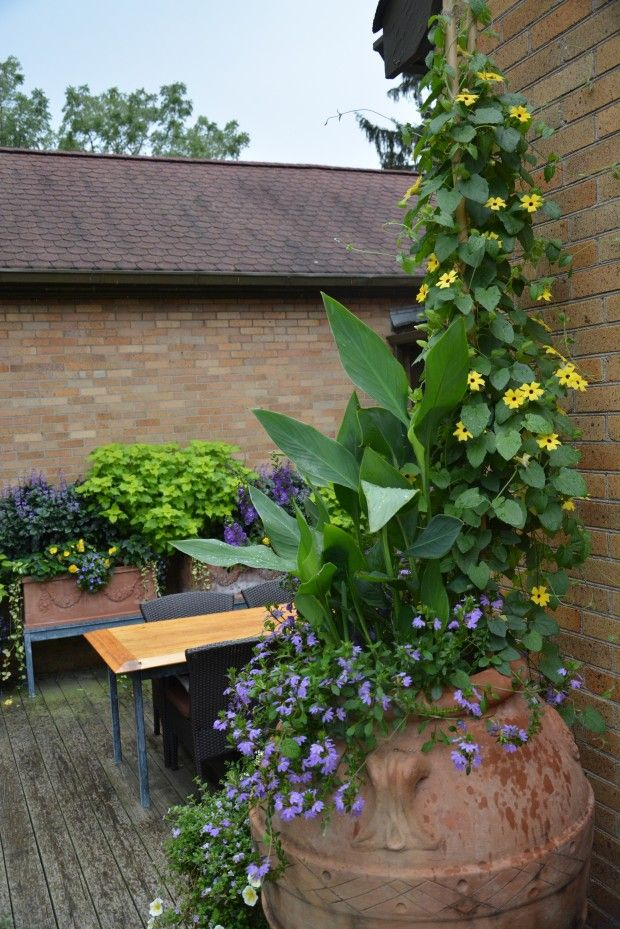 Dirt Simple- Gardening and Landscape Blog by Deborah Silver