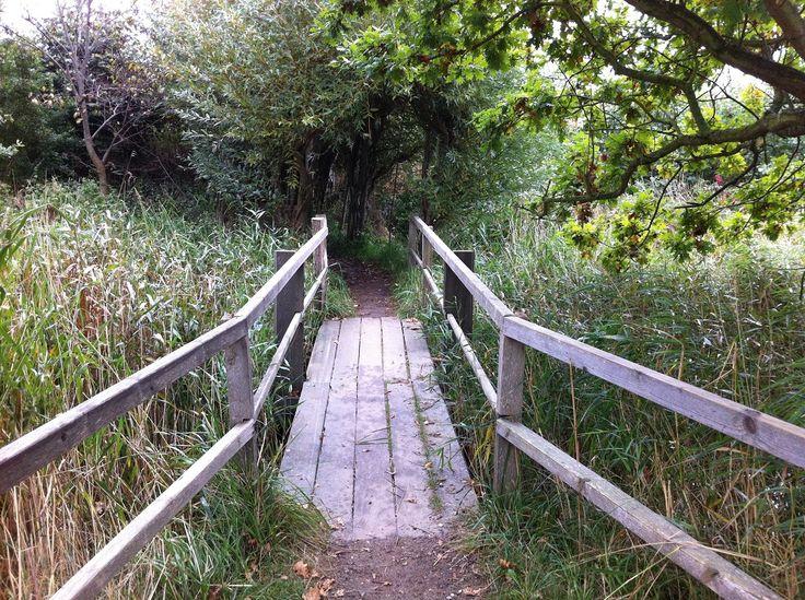 Holzbrücke im NABU Wasservogelreservat Wallnau auf Fehmarn in Schleswig-Holstein