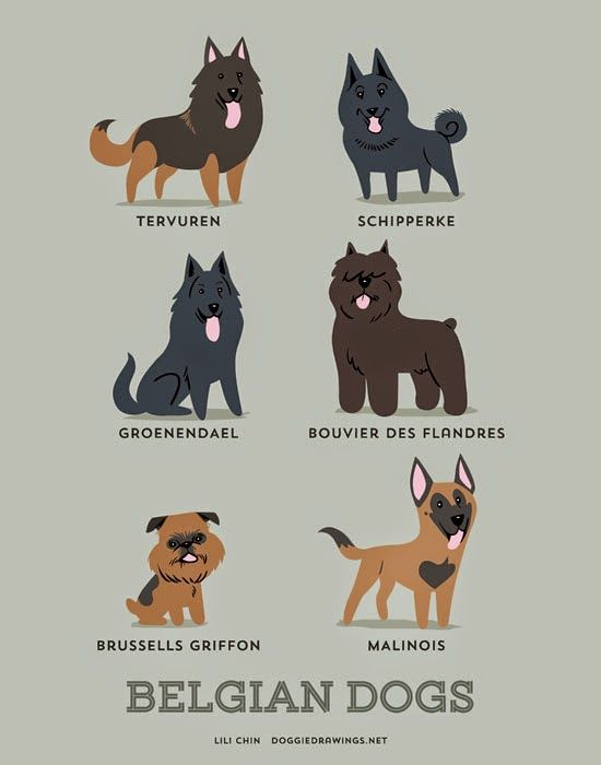 Belgian dogs (c) Lili Chin @ doggiedrawings.net