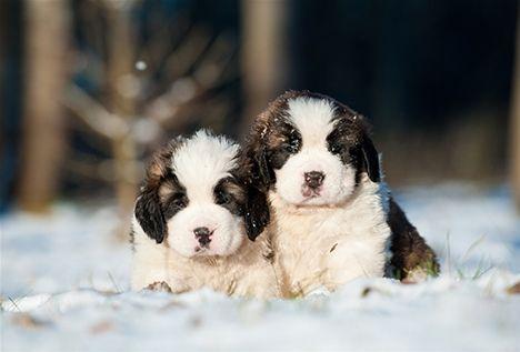 En kall vinternatt sökte en hundmamma min hjälp - Nära