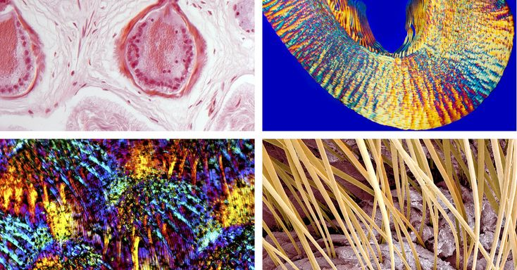 11+ What is found in both plant and animal cells ideas in 2021