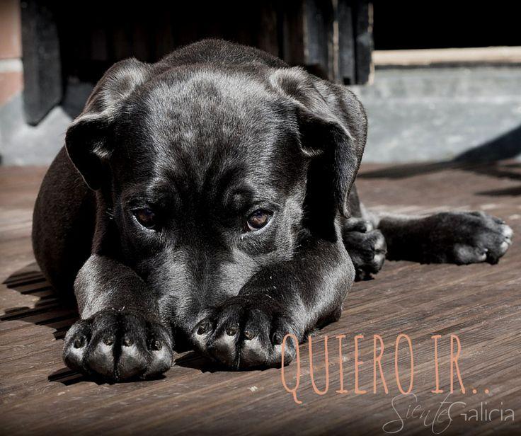 Hotel-SPA bienestar Moaña****, Rías Baixas. Se admiten #mascotas bajo petición con un suplemento de 20€/noche, incluye: bebedero, comedero y cuna para la mascota en la habitación.