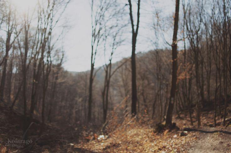 forest by kofaragozsuzsiphotos  www.facebook.com/kofaragozsuzsiphotos